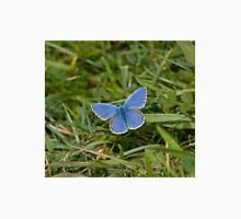 Adonis Blue Butterfly T-Shirt
