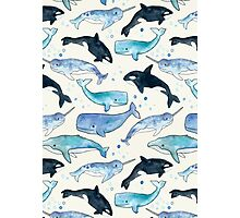 Whales, Orcas & Narwhals Photographic Print