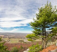 Appalachian Mountain Pine by ezumeimages