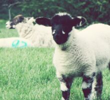 Baby Sheep Lamb Sticker