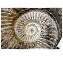 Spiral Fossil Poster