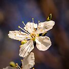 Blossom on a stick by JEZ22