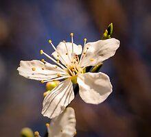 Blossom on a stick by JEZ22