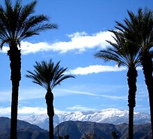 PALM TREES AND THE SNOWY MOUNTAINS by JAYMILO