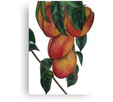 Nectarines Canvas Print