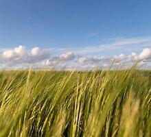 Grass sky by Sebastien Coell