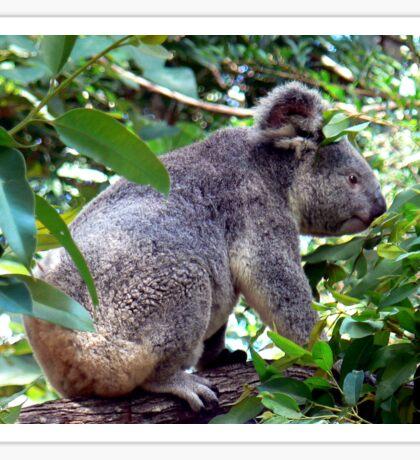 Alma Koala Sticker