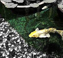 Koi Fish in Pond by textured