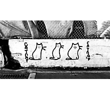 Catnip Graffiti Photographic Print