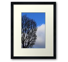 Winter Tree and Clouds 2 Framed Print