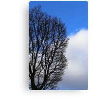 Winter Tree and Clouds 2 Canvas Print