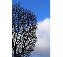 Winter Tree and Clouds 2 Photographic Print