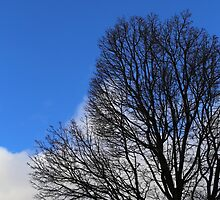 Winter Tree and Clouds 3 by marybedy