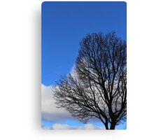 Winter Tree and Clouds 3 Canvas Print