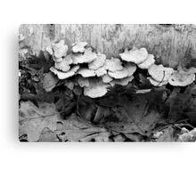 Fallen Birch and Fungi 2 BW Canvas Print