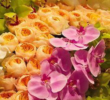 Orchid Topiary by umeimages