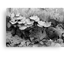 Fallen Birch with Fungi 4 BW Canvas Print