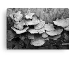Fallen Birch with Fungi BW Canvas Print