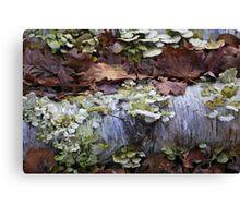 Fallen Birch with Green Fungi 3 Canvas Print