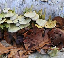 Fallen Birch with Green Fungi 4 by marybedy