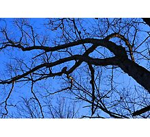 Graceful Winter Tree Photographic Print