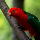Curious King Parrot IV by Josie Eldred