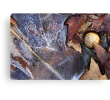 Hiking Trail Ice with Leaves and Mushroom Canvas Print