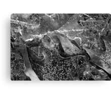 Hiking Trail Ice with Leaves BW Canvas Print