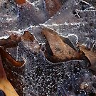 Hiking Trail Ice with Leaves by marybedy