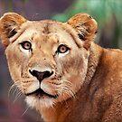 Lioness by Josie Eldred