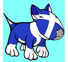 Scottish Bull Terrier Photographic Print