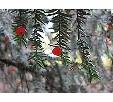 Red on Frosty Photographic Print