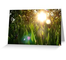 Springtime Sunshine Greeting Card
