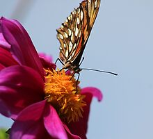 Purple Flower and Butterfly by rhamm