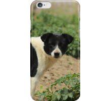 Stray Black and White Dog iPhone Case/Skin