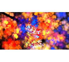 Flowering Branches Photographic Print