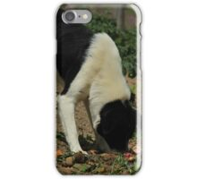 Stray Dog in a Field iPhone Case/Skin
