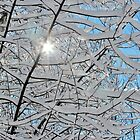 A Winter Wonder by Kathleen Daley