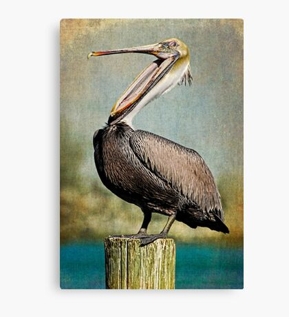 Belly Laugh - Brown Pelican Canvas Print