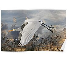 Beach Beauty - Great Egret Poster