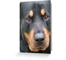 Beautiful  Female Rottweiler Portrait Vector Greeting Card