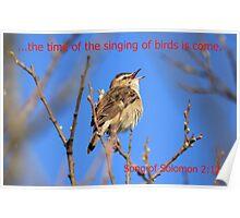 Sedge Warbler Poster