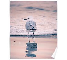 Lone Seagull Poster