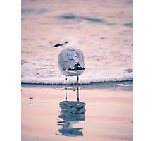 Lone Seagull Photographic Print