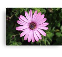 Purple Flower in Bloom Canvas Print