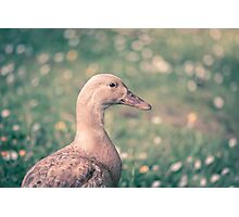 Duck in the meadow Photographic Print