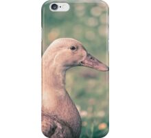 Duck in the meadow iPhone Case/Skin