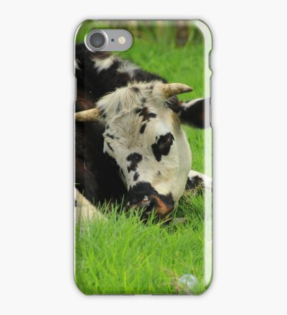 Bull in a Pasture on a Farm iPhone Case/Skin