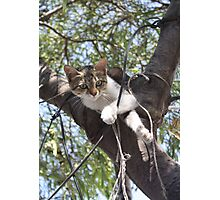 Bi-Color Tabby Cat In Tree 3 Photographic Print