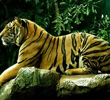 Bengal Tiger by trendism